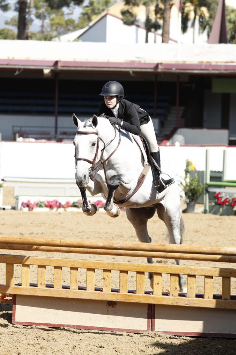 Chad Mahaffey Stables - Available Horses - Cameron C
