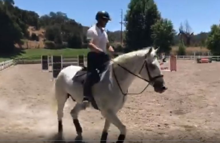 "Chad Mahaffey Stables - Available Horses - White Knight ""Winston"""